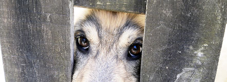 Dog behind a fence in Altino Montemonaco Stock Images