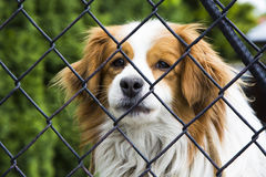 Dog behind a fence Stock Image