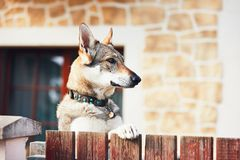 Dog behind the fence Stock Images