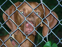 Dog behind fence Stock Photography