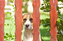 Dog behind fence Stock Images