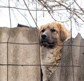 Dog behind a fence Royalty Free Stock Photos