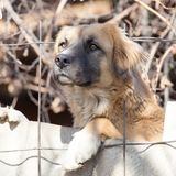 Dog behind a fence Royalty Free Stock Images