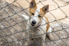 Dog behind the fence Royalty Free Stock Photos
