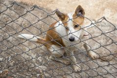 Dog behind the fence Royalty Free Stock Photography