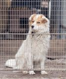 Dog behind a fence Royalty Free Stock Photo