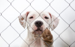 Dog behind the fence Stock Photography