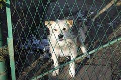 Dog behind a fence Stock Photos