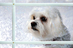 Dog behind a window Royalty Free Stock Images