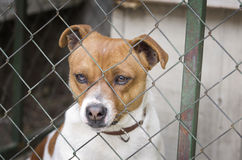 Dog behind wire mesh Stock Image