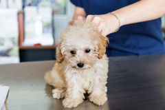 Dog being examined by a vet Stock Image