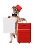 Dog Bellhop With Sign Royalty Free Stock Image