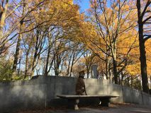 Dog on a bench in the fall. Boxer dog exploring Theodore Roosevelt Island Stock Photos