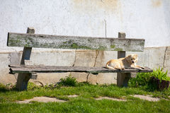 Dog on bench Stock Photos
