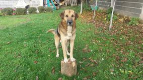 Dog. Beutiful dog with flower Stock Image