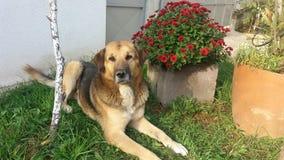 Dog. Beutiful dog with flower Royalty Free Stock Image