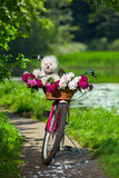 Dog on a bicycle Stock Photos