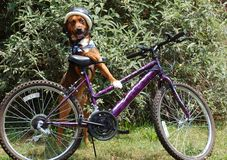 Dog and Bicycle Royalty Free Stock Photos