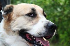 Dog_2 Royalty Free Stock Photography