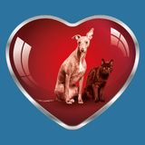 I like dogs and cats, they are in my heart ! Stock Image