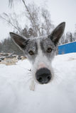 Dog with big black wet nose. Winter. Shallow depth of field.  Stock Photos