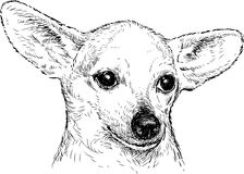Dog with big ears Royalty Free Stock Photography