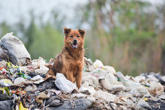 Dog on big garbage heap Royalty Free Stock Photos