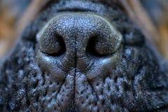 Dog big nose Royalty Free Stock Photo