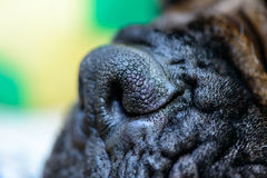 Dog big nose Royalty Free Stock Images
