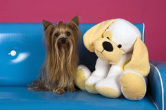 Dog with big plush Stock Images