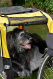 Dog bike trailer. Ready for traveling. Dog sits in a bike trailer stock photo