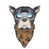 Dog biker illustration Stock Photos