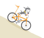 Dog biking downhill Stock Images