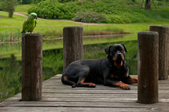 Dog and bird on the bridge Royalty Free Stock Images