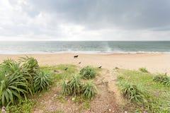 Dog and birds playing at Toduwawa. Sri Lanka stock photography