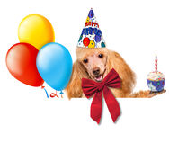 Dog birthday with balloons and cake. Stock Photo