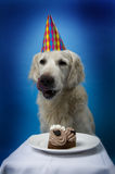 Dog with birthday cake royalty free stock image