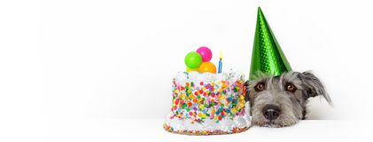 Dog With Birthday Cake Web Banner. Cute dog with party hat and birthday cake. Horizontal web banner or social media cover with copy space Royalty Free Stock Photo