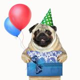Dog with a gift box and balloons stock image