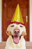 Dog birthday party Stock Image