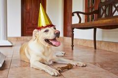 Dog birthday party royalty free stock photos