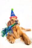 Dog Birthday Party Royalty Free Stock Photo