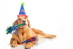 Dog Birthday Party Stock Images