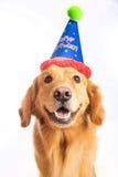 Dog Birthday Party Stock Photography