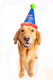 Dog Birthday Party Stock Photos