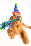 Dog Birthday Party Royalty Free Stock Image