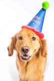 Dog Birthday Party Stock Photography