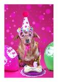 Dog birthday royalty free stock photography