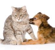 Dog bites cat.  on white background Stock Photography