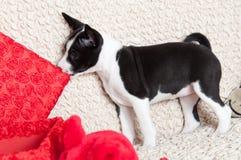 A dog bites pillow Stock Photo